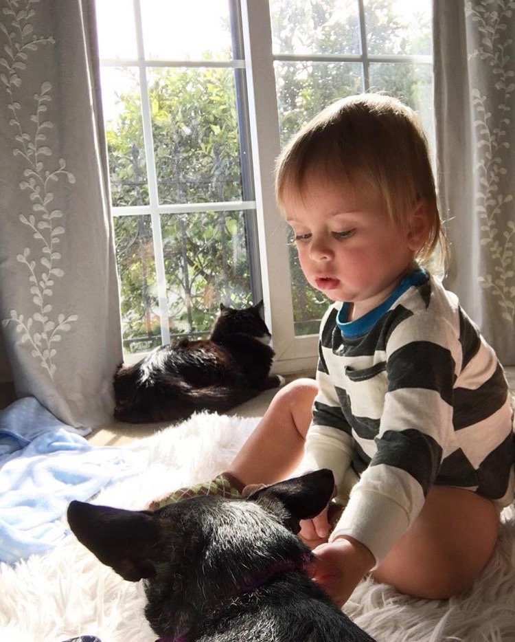 how to introduce your baby to pets